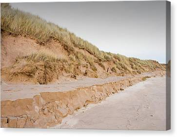 Sand Dunes At Beadnell Canvas Print by Ashley Cooper