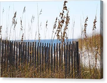 Canvas Print featuring the photograph Sand Dunes by Michele Kaiser