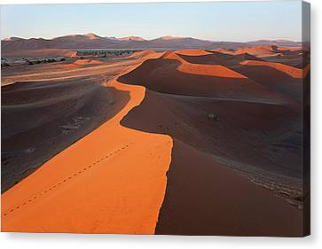 Sand Dunes, Namib Naukluft National Canvas Print by Peter Adams