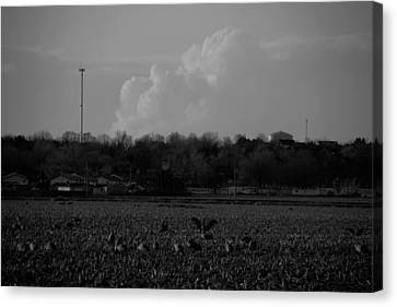 Sand Hill Cranes With Nebraska Thunderstorm Canvas Print
