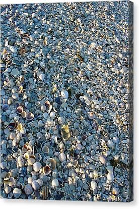 Canvas Print featuring the photograph Sand Key Shells by David Nicholls