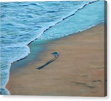 Sand Piper Canvas Print by Joanne Grant