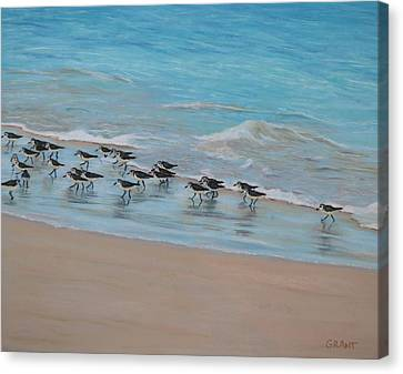 Sand Piper On Parade Canvas Print