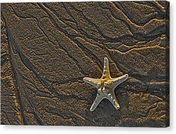 Sand Prints And Starfish  Canvas Print by Susan Candelario
