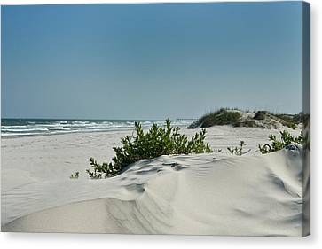 Sand Veggie Canvas Print by Denis Lemay