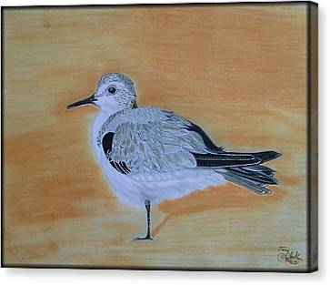 Sanderling Canvas Print by Tony Clark