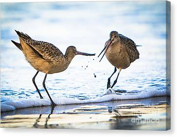 Sanderlings Playing At The Beach Canvas Print by John Wadleigh