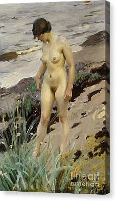 Girl Studying Canvas Print - Sandhamn Study by Anders Leonard Zorn