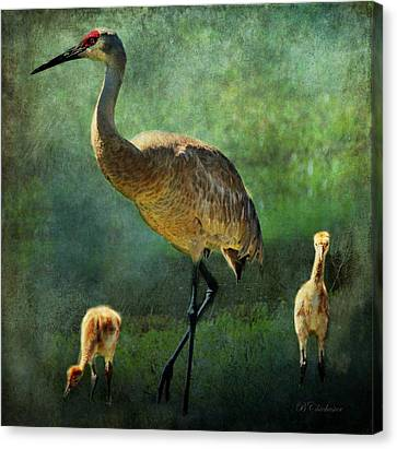 Sandhill And Chicks Canvas Print