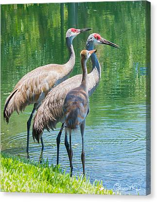 Mom Look What I Caught Canvas Print by Susan Molnar