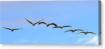 Sandhill Crane Flight Pattern Canvas Print by Mike Dawson