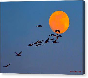 Sandhill Crane Migration Canvas Print by Julie Dant