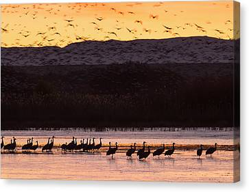 Sandhill Cranes And Other Waterfowl Canvas Print by Maresa Pryor