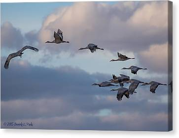 Canvas Print featuring the photograph Sandhill Cranes by Beverly Parks