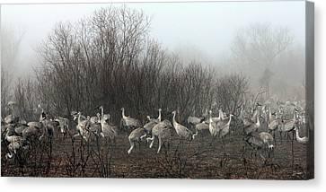 Sandhill Cranes In The Fog Canvas Print