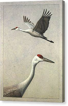 Sandhill Cranes Canvas Print by James W Johnson