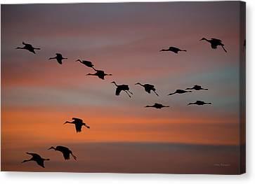 Sandhill Cranes Landing At Sunset Canvas Print