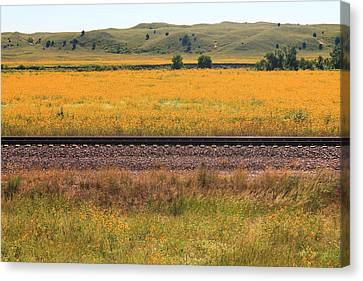 Sandhill Sunflowers Canvas Print