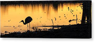Sandhill Sunrise Canvas Print