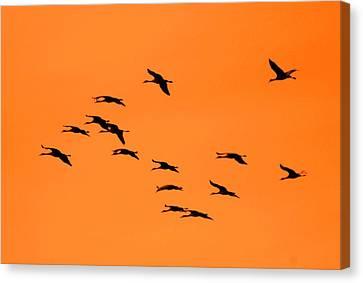 Sandhill Sunrise Canvas Print by T C Brown