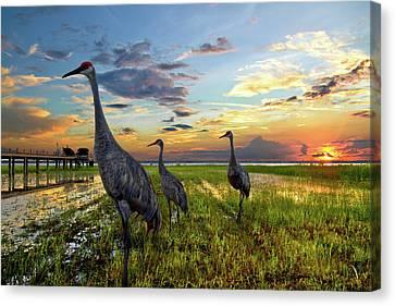 Crane Canvas Print - Sandhill Sunset by Debra and Dave Vanderlaan