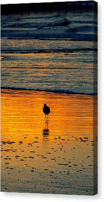 Sandpiper In Golden Dawn Surf Canvas Print by Cindy Croal