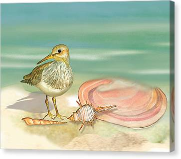 Sandpiper On Beach Canvas Print by Anne Beverley-Stamps