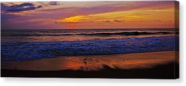 Canvas Print featuring the photograph Sandpiper On The Beach by John Harding