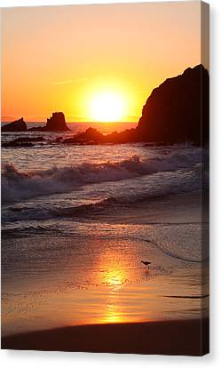 Sandpiper Sunset Canvas Print