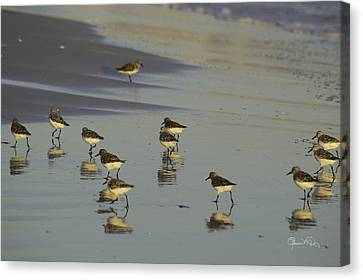 Sandpiper Sunset Reflection Canvas Print by Susan Molnar