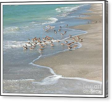 Sandpipers On The Beach Canvas Print