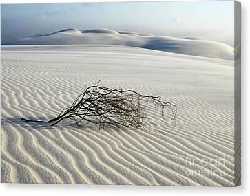 Sands Of Time Brazil Canvas Print by Bob Christopher