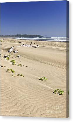 Sandy Beach On Pacific Ocean In Canada Canvas Print by Elena Elisseeva