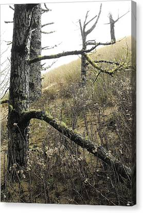 Canvas Print featuring the photograph Sandy Hillside by Adria Trail