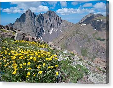 Sangre De Cristos Crestone Peak And Wildflowers Canvas Print by Cascade Colors