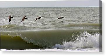 Sanibel Pelicans Canvas Print by John Wartman