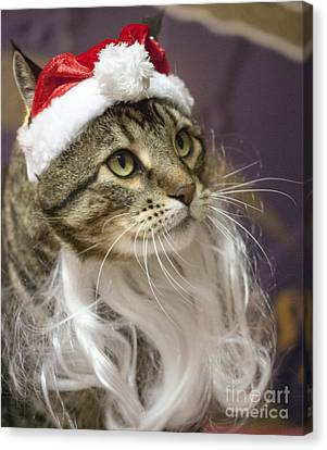 Santa Cat Canvas Print