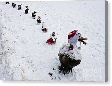 Santa Ducklings Canvas Print by Thomas Marchessault