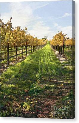 Santa Maria Vineyard Canvas Print