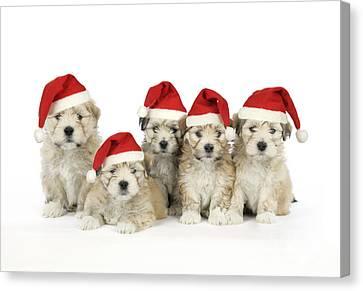 Santa Puppy Dogs Canvas Print