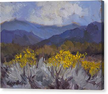 Santa Rosa Mountains And Desert Marigolds Canvas Print