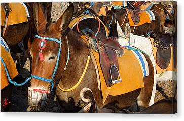 Colette Canvas Print - Santorini Donkeys Ready For Work by Colette V Hera  Guggenheim