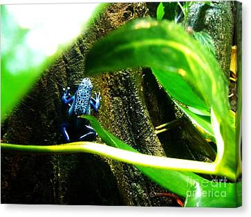 Canvas Print featuring the photograph Sapo by Vanessa Palomino
