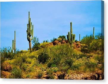 Sargaro Cactus And Flowers Canvas Print by Richard Jenkins
