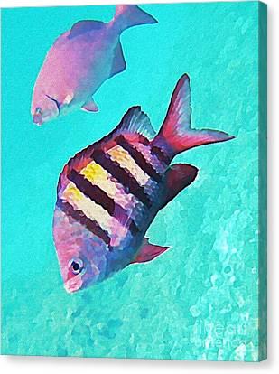 Sargeant Fish Canvas Print