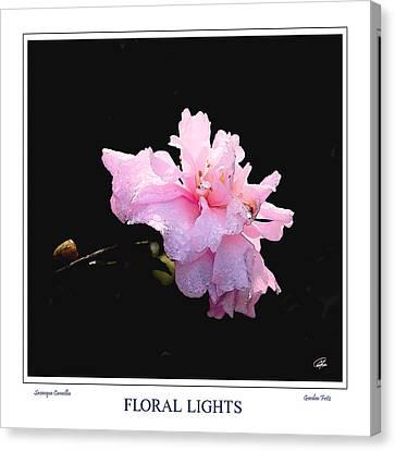 Sasanqua Camellia Canvas Print