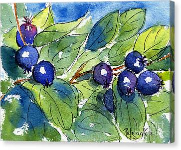 Saskatoon Berries Canvas Print by Pat Katz