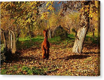 Sassy Alpaca Canvas Print by Susan Hernandez