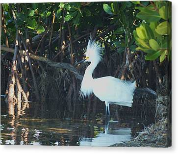 Sassy Snowy Egret Canvas Print by Anna Villarreal Garbis