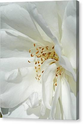 Satin Sheets Canvas Print by Steve Taylor